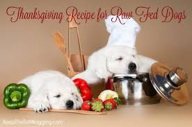 thanksgiving recipe for fed dogs keep the wagging