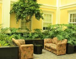 indoor plants that need little light plant autumn plants plants good for the bathroom nigella plant