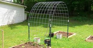 Trellis For Cucumbers In Pots Best 25 Cucumber Trellis Ideas On Pinterest Companion Planting