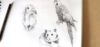tutorials for drawing realistic animals in our free eguide