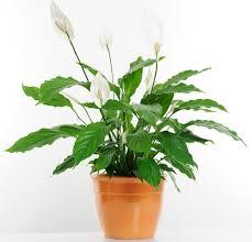 keep your indoor plants happy and healthy