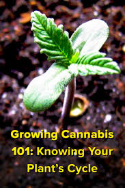best light for weed seedlings 137 best grow like a pro images on pinterest growing weed