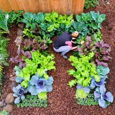 Small Backyard Vegetable Garden by Eksterior Design Vegetable Garden Layout Ideas Garden Layout