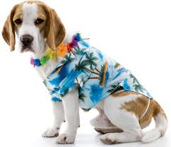 Halloween Hawaiian Shirt by Hawaiian Dog Pet Costume Buycostumes Com