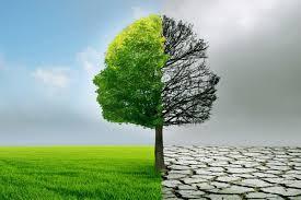 Define Tree Lift Run Bang