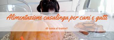 alimentazione casalinga gatto alimentazione casalinga per cani e gatti in cosa consiste