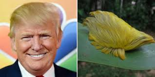 trump s donald trump is running for president here are 11 animals who share