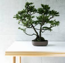 Plant For Desk Good And Bad Feng Shui Plants
