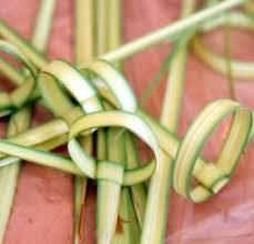 lulav holder binding the four kinds sukkot simchat torah