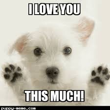 Cute I Love You Meme - love you this much