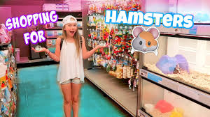 getting 3 hamsters shopping at petco and petsmart for hamster