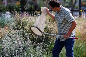 Urban Garden Los Angeles La Museum Enlists Volunteers In Search For Bugs Plants Naples