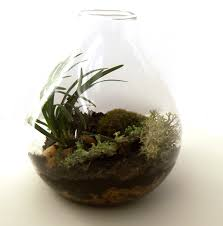 how to build a great glass jar terrarium quora