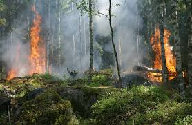 Definition For Wildfire by Number Of Forest Fires Decreases In Costa Rica The Costa Rica News