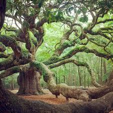 best 25 trees beautiful ideas on trees cherry