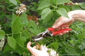 pruning the gardener s