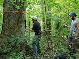 indiana dnr to log thousands of trees in brown county backcountry area