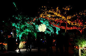 zoo lights houston 2017 dates beat the crowds save money at houston s favorite zoo lights