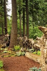Washington State Botanical Gardens Rhododendron Species Botanic Garden In Federal Way Wa Places I
