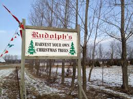 day 210 of 365 u2013 rudolph u0027s christmas tree farm u2013 365 things to do