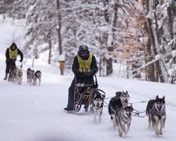 pennsylvania sled dog club