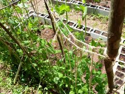 How To Make Trellis For Peas Build An Inexpensive Trellis For Your Small Garden