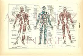 Human Anatomy Terminology Human Anatomy Free Download Anatomy Dictionary Gallery Free