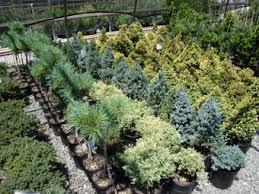 appeldoorn landscape nursery