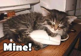 Mine Meme - mine cat meme cat planet cat planet