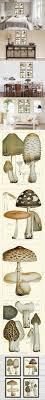 mushroom print set of 4 antique botanical beautiful edible and