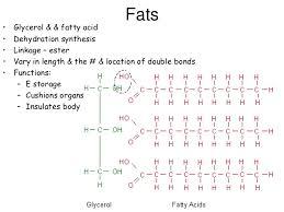 ap bio ch 3 functional groups u0026 macromolecules