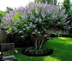 outdoor yard chaste trees wearefound home design