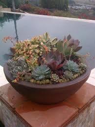 Succulent Planter How To Make Succulent Planter Boxes Images About Succulent Plants