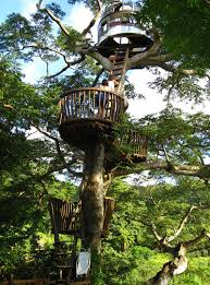 three house tree house design ideas for modern family inspirationseek com
