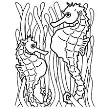coloring pages impressive seahorse coloring fancy 71