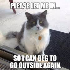 Silly Cat Memes - silly cat memes funny felines guaranteed to make you laugh