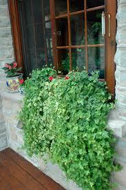 inside the box benefits beauty u0026 tricks of gardening with pots