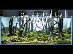 Aga Aquascaping Contest 2014 2015 Aga Aquascaping Contest 60l 120l Best