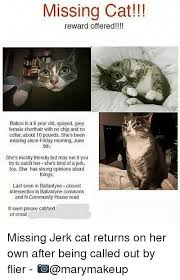 Missing Cat Meme - 25 best memes about missing cat missing cat memes