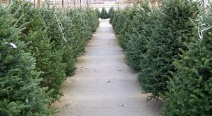 america the beautiful series the best christmas tree lot in every