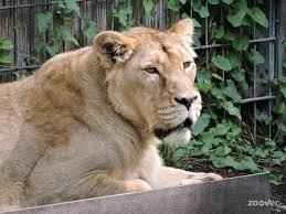garten köln zoologischer garten zoo k禧ln cologne k禧ln photos travel