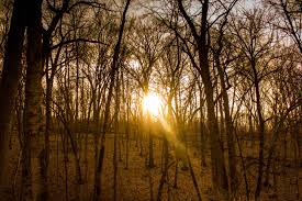 Iowa forest images Free stock photo of golden sunshine at yellow river state forest jpg