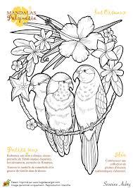 dessin à colorier mandalas polynésie les oiseaux hugolescargot