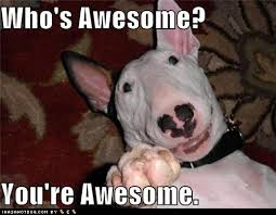 You Are Awesome Meme - image 122856 who s awesome you re awesome sos groso
