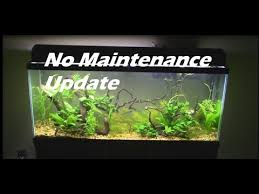 55 gallon aquarium light no maintenance tank 55 gallon aquarium setup update youtube