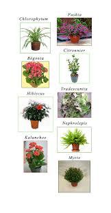 plantes dans la chambre de bonnes fleurs pour les chambres de vos enfants zinezoé