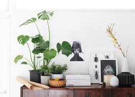 nasa lists 14 indoor plants that will detox your home