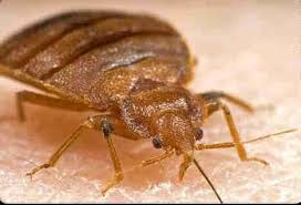 Common Bathroom Bugs Bed Bugs Pest Control Canada