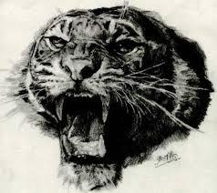 pencil sketch of roaring tiger by chaseroflight on deviantart