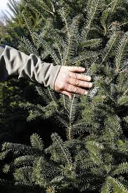 a list of christmas tree farms in central kentucky lexington